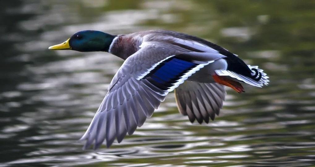 Découvrez le Parc des Oiseaux à Villars-les-Dombes